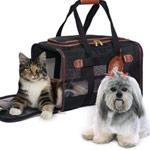Viajar com o seu animal de estimação